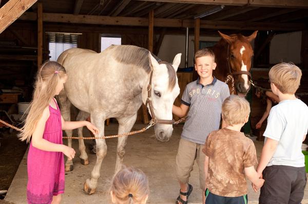 Pferde_babybauernhof